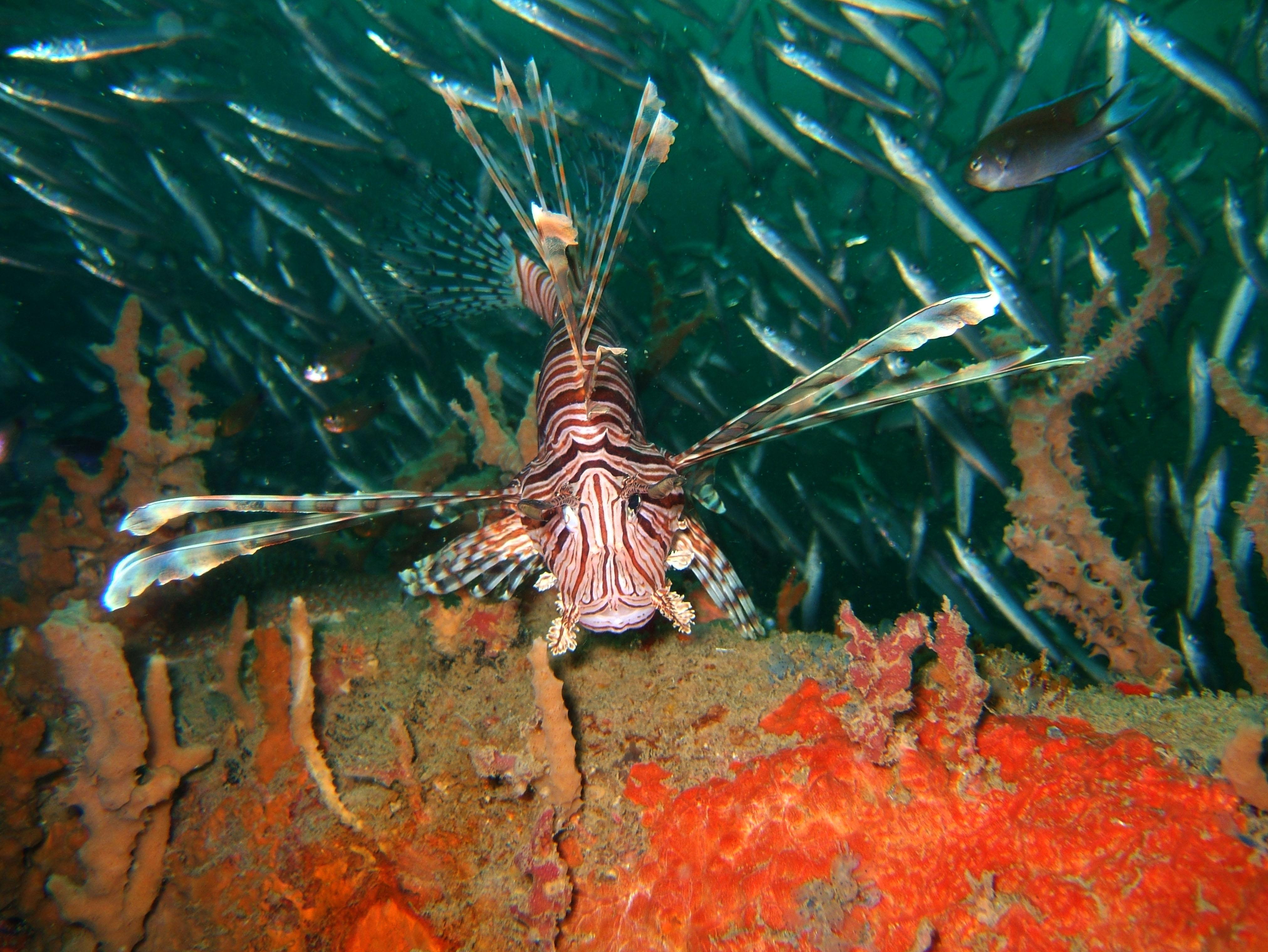 Coron dive site 2 Wreck dive IJN Taiei Maru July 2005 31