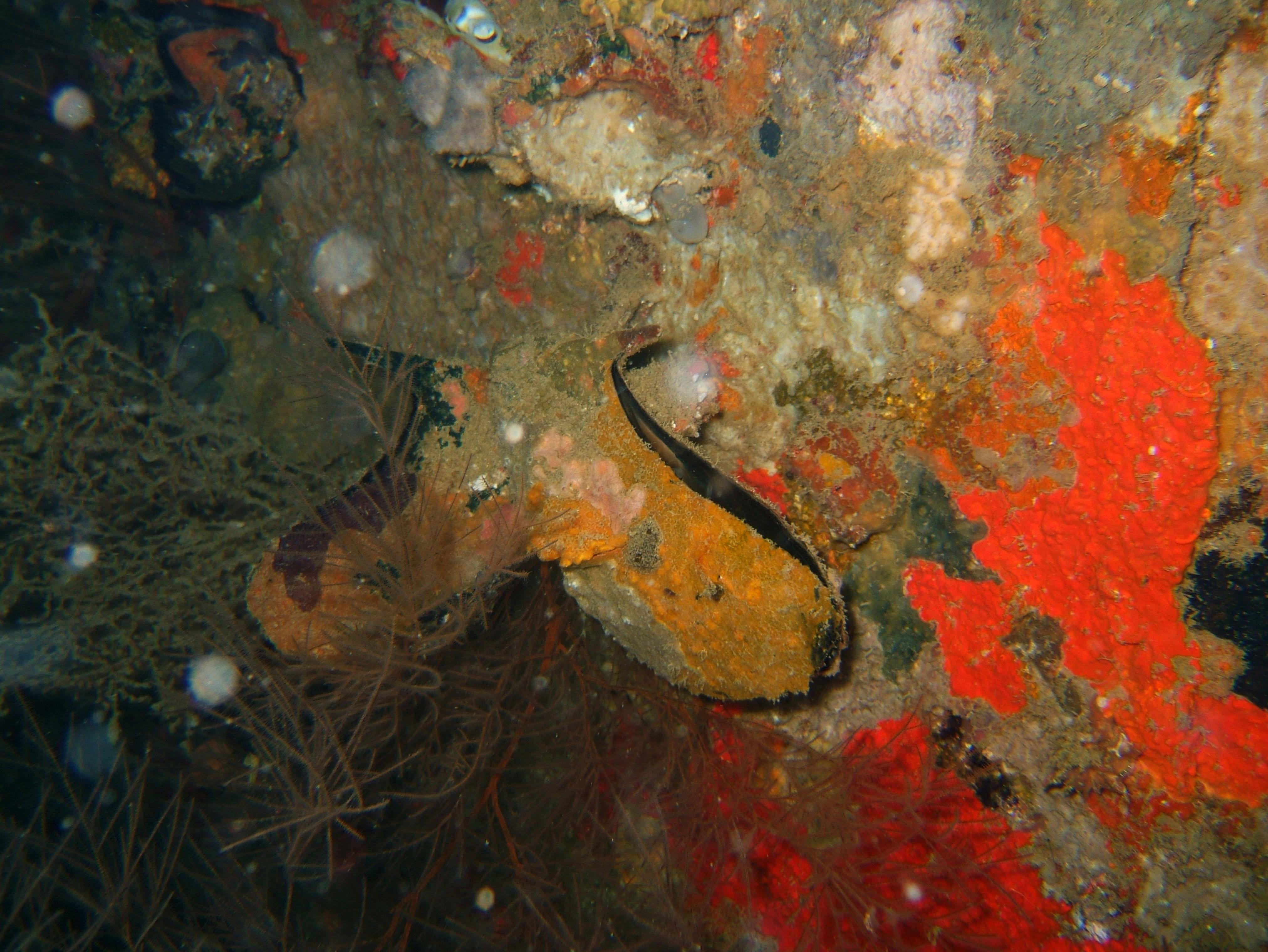 Coron dive site 2 Wreck dive IJN Taiei Maru July 2005 36