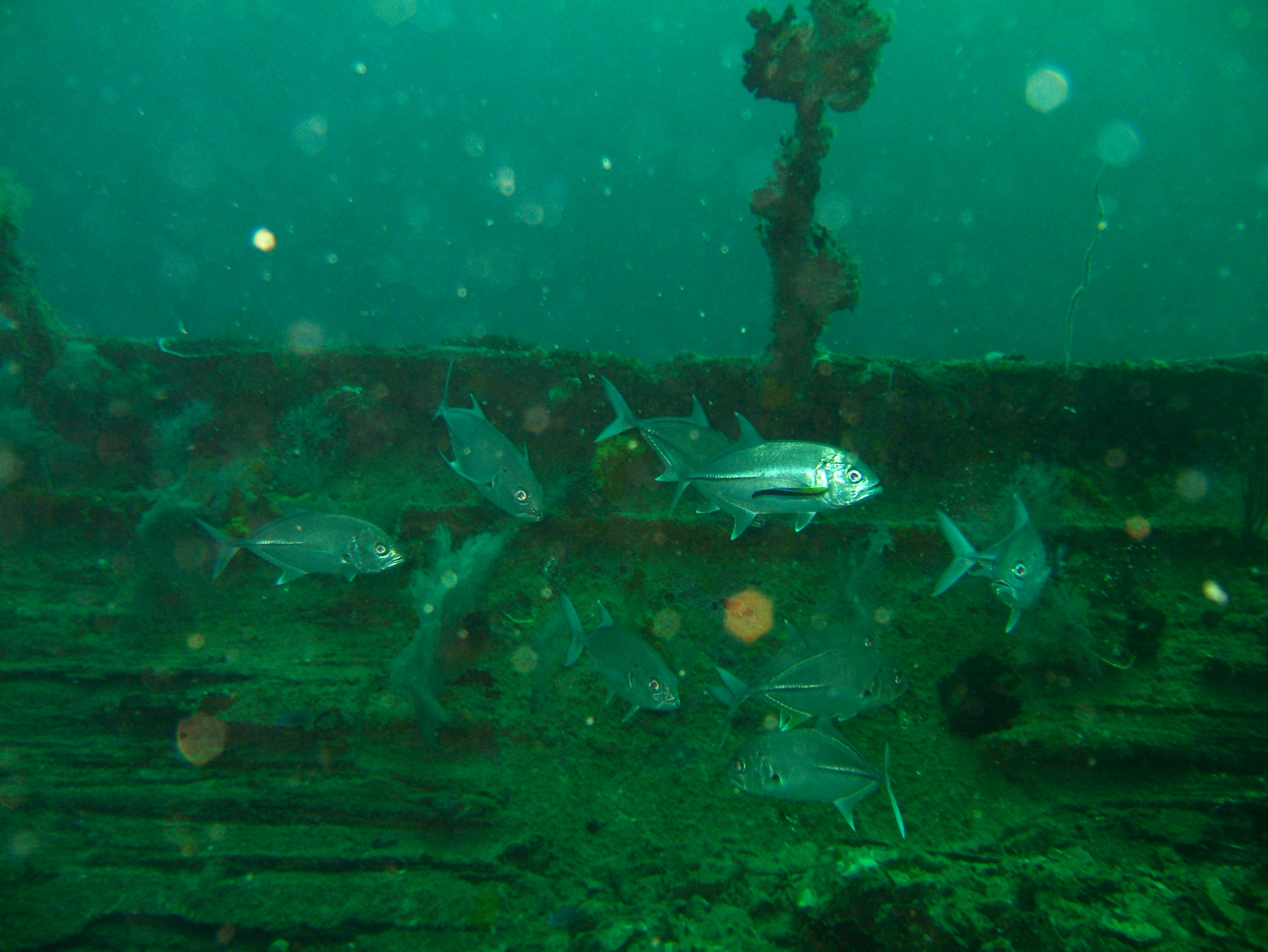 Coron dive site 7 Wreck dive IJN Irako July 2005 11