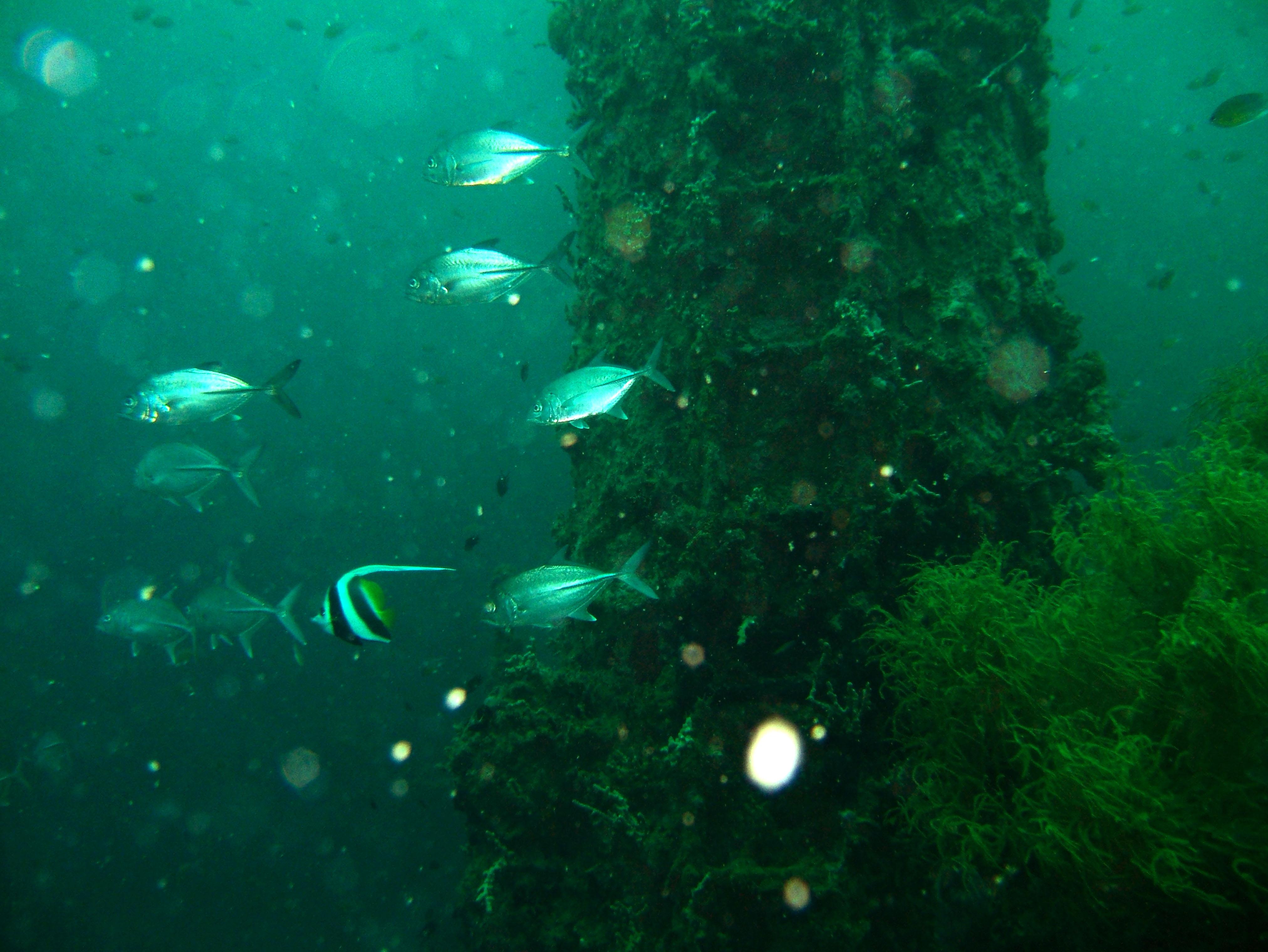 Coron dive site 7 Wreck dive IJN Irako July 2005 17