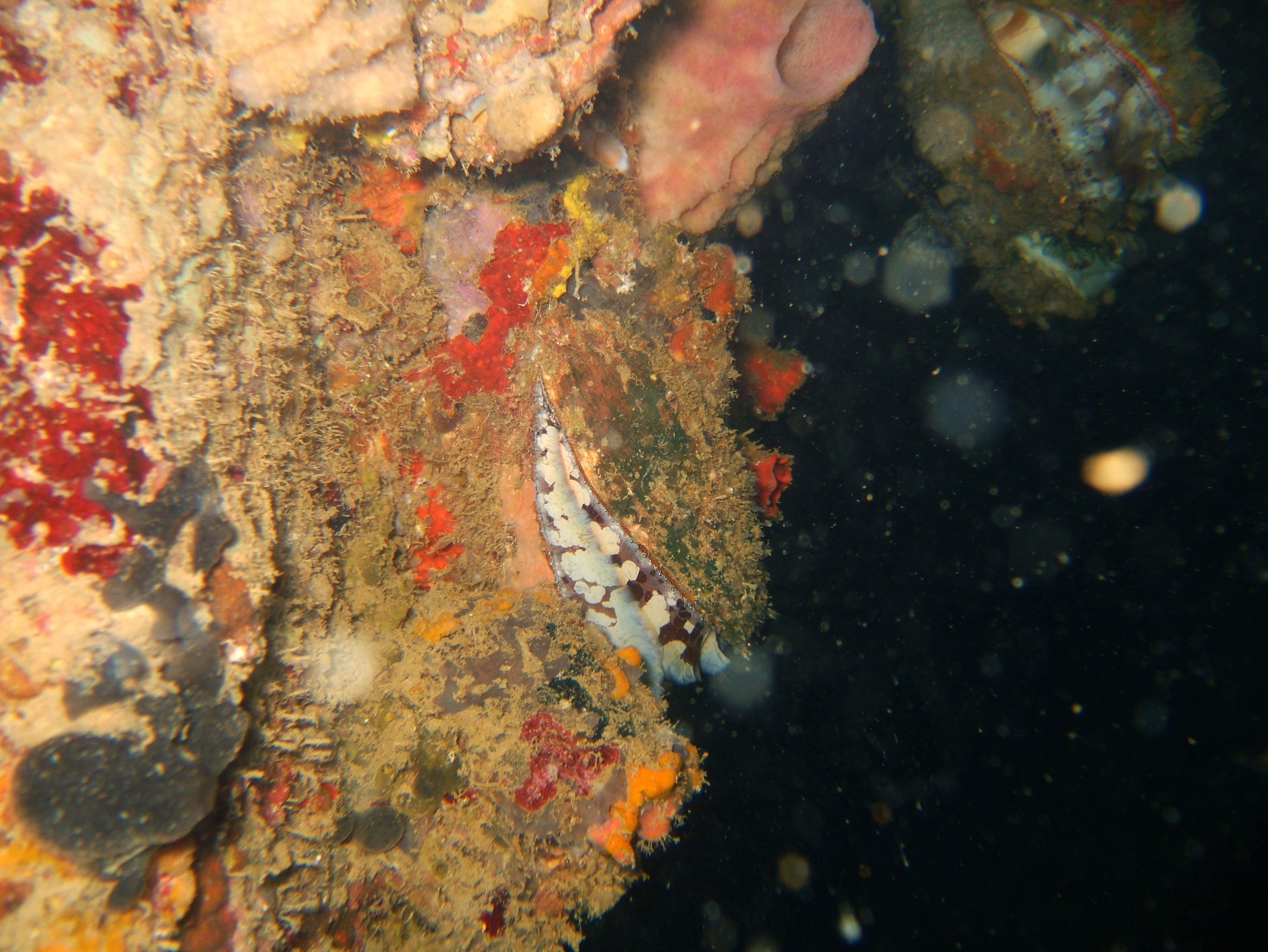 Coron dive site 8 Wreck dive IJN Olympia Maru July 2005 10