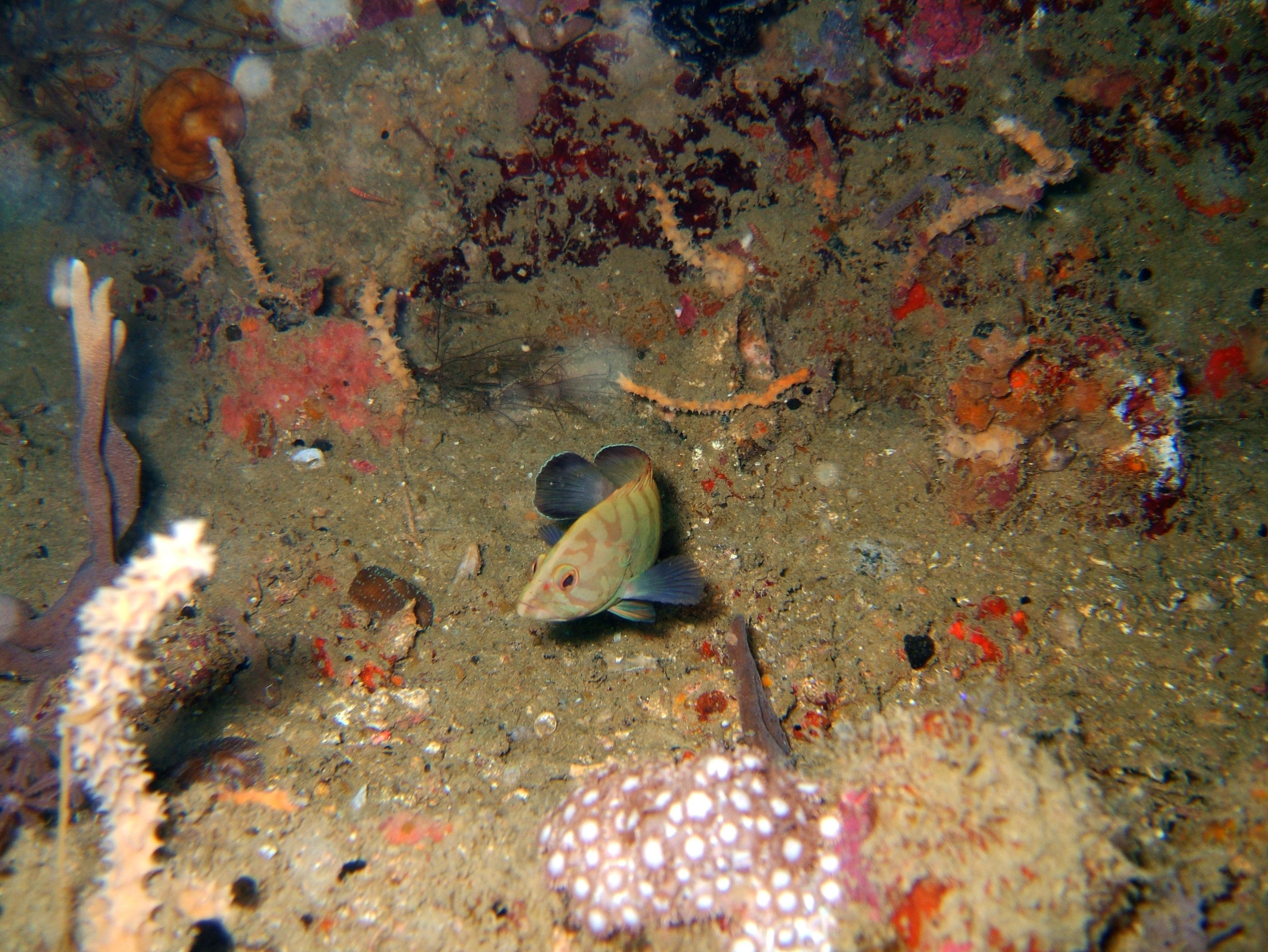 Coron dive site 8 Wreck dive IJN Olympia Maru July 2005 11