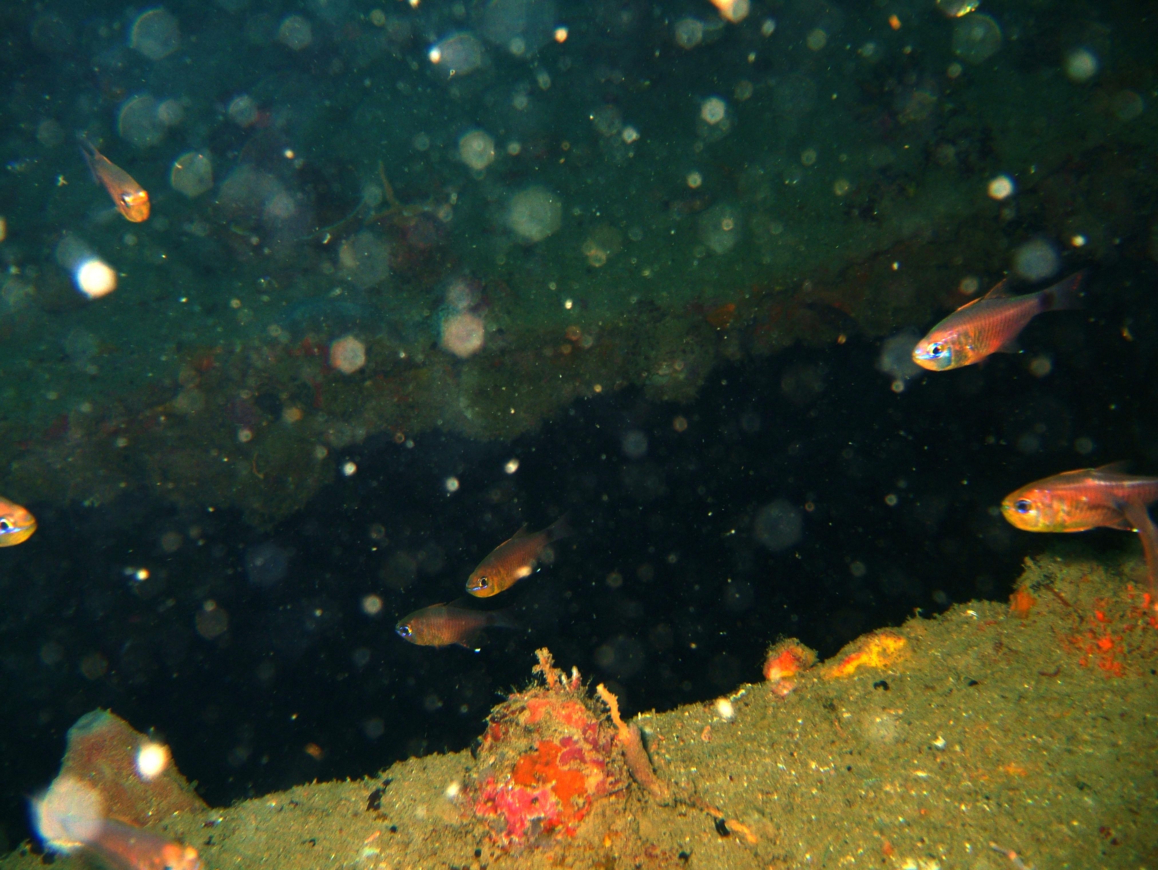 Coron dive site 8 Wreck dive IJN Olympia Maru July 2005 12