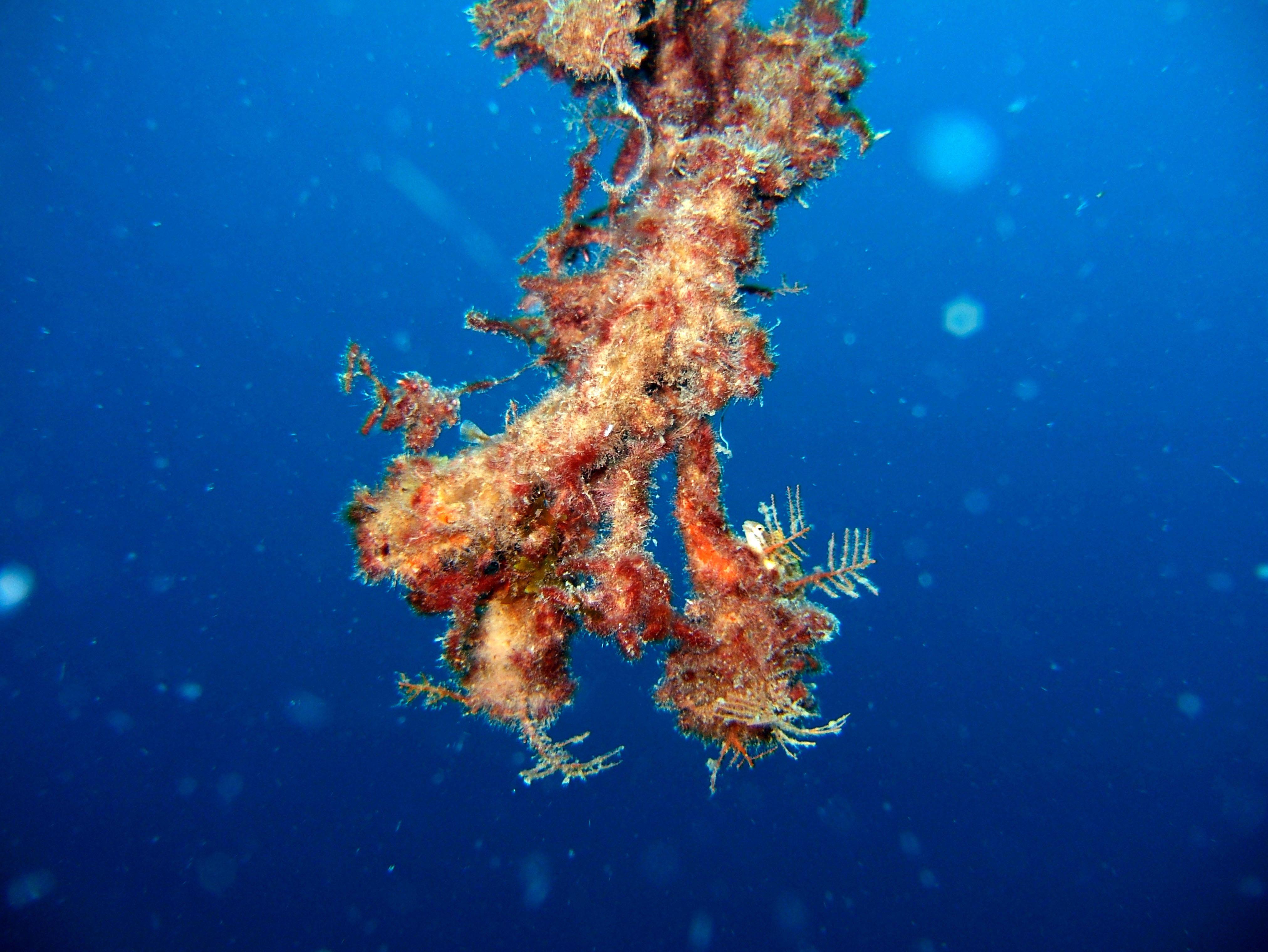 Coron dive site 8 Wreck dive IJN Olympia Maru July 2005 24