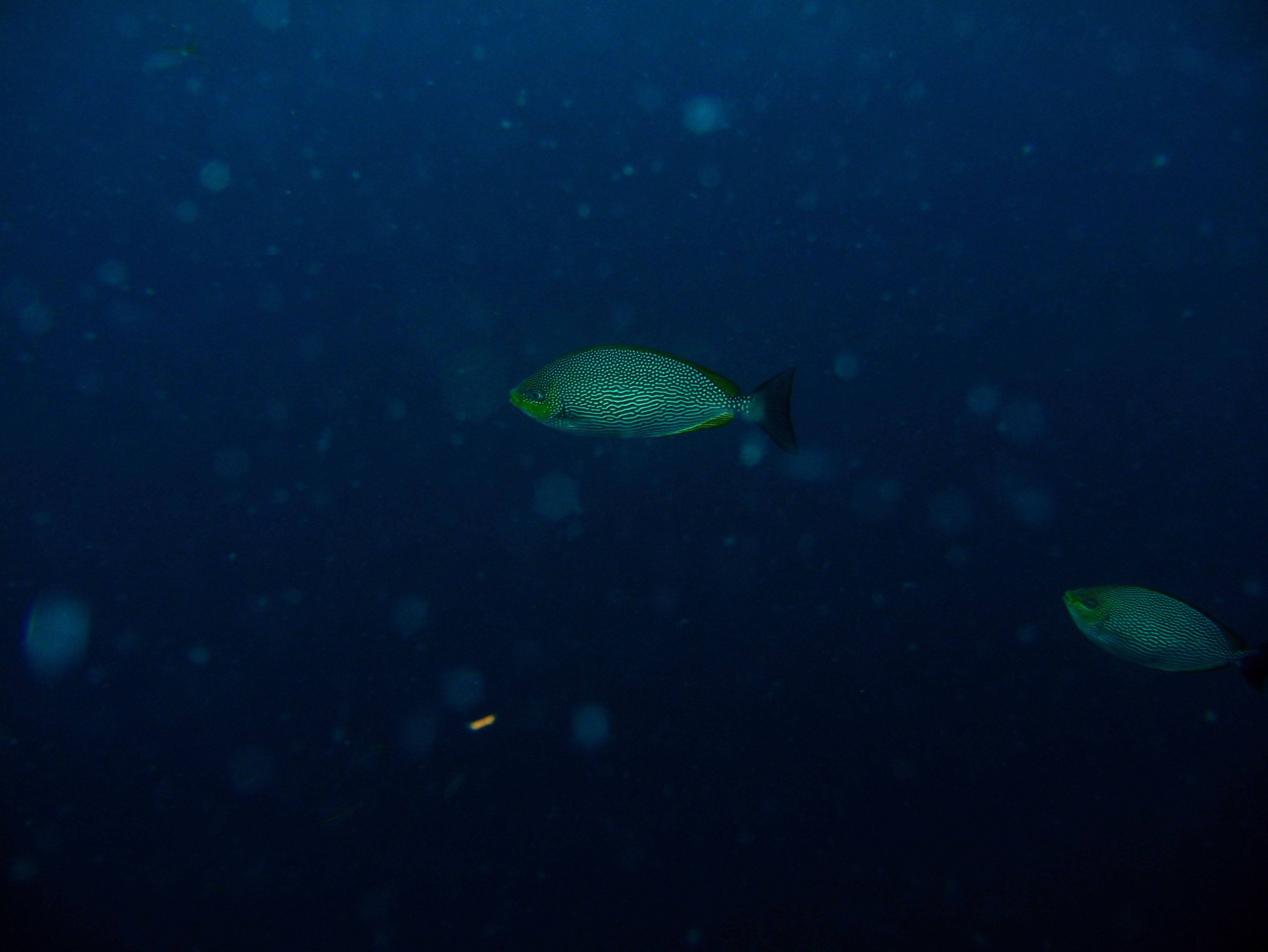 Coron dive site 8 Wreck dive IJN Olympia Maru July 2005 26