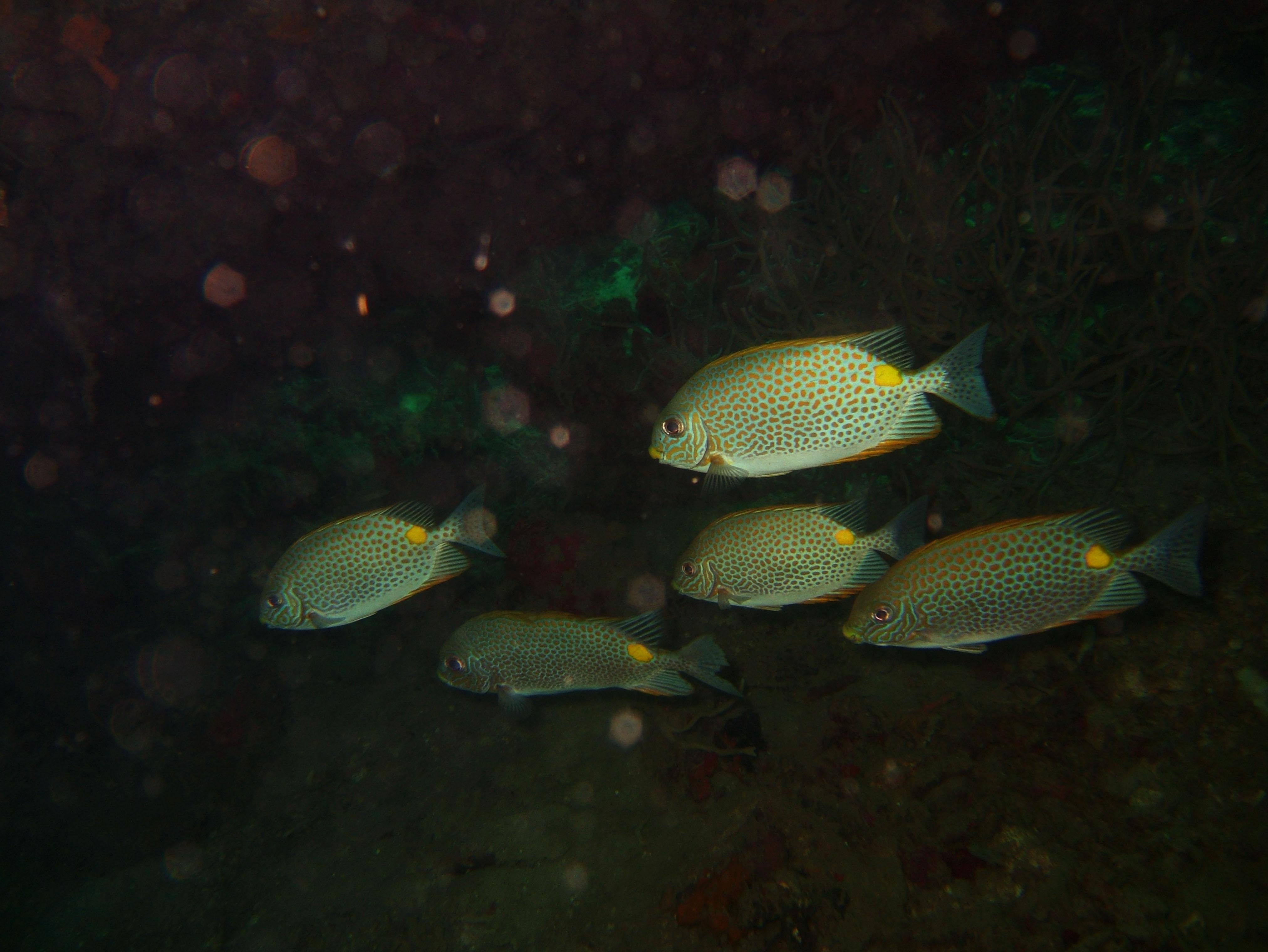 Coron dive site 9 Wreck dive East Tangat July 2005 02