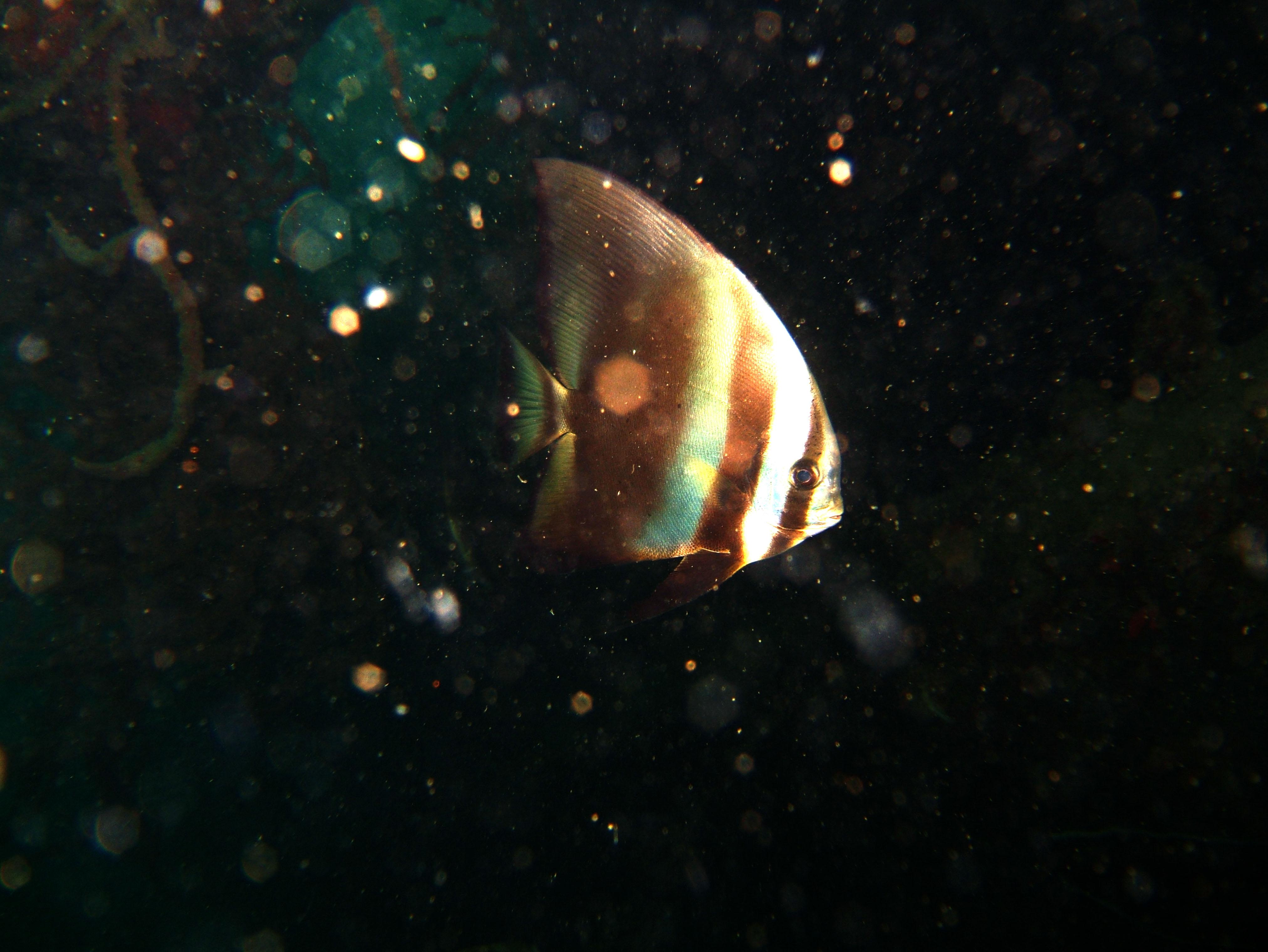 Coron dive site 9 Wreck dive East Tangat July 2005 11
