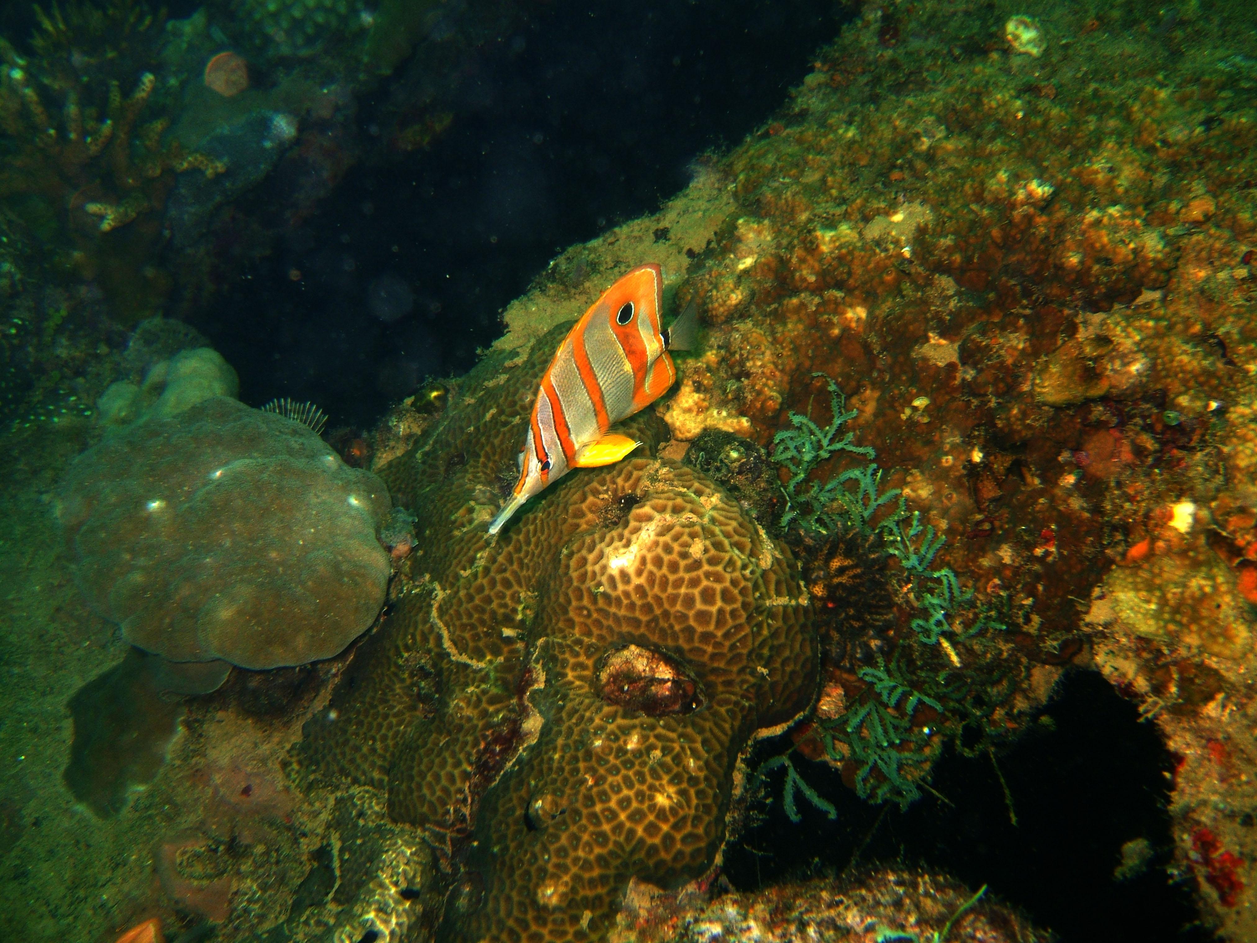 Coron dive site 9 Wreck dive East Tangat July 2005 23