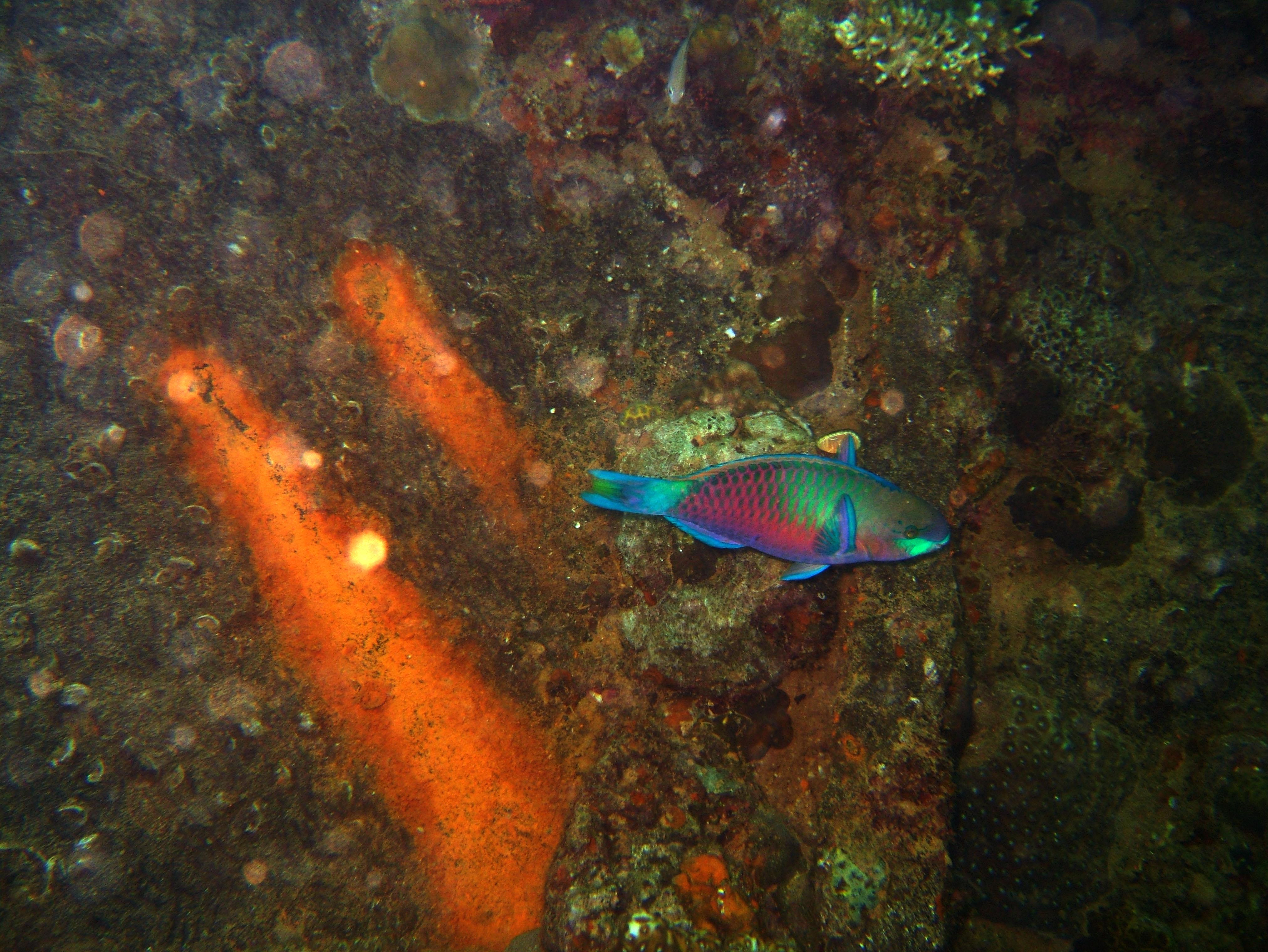 Coron dive site 9 Wreck dive East Tangat July 2005 35