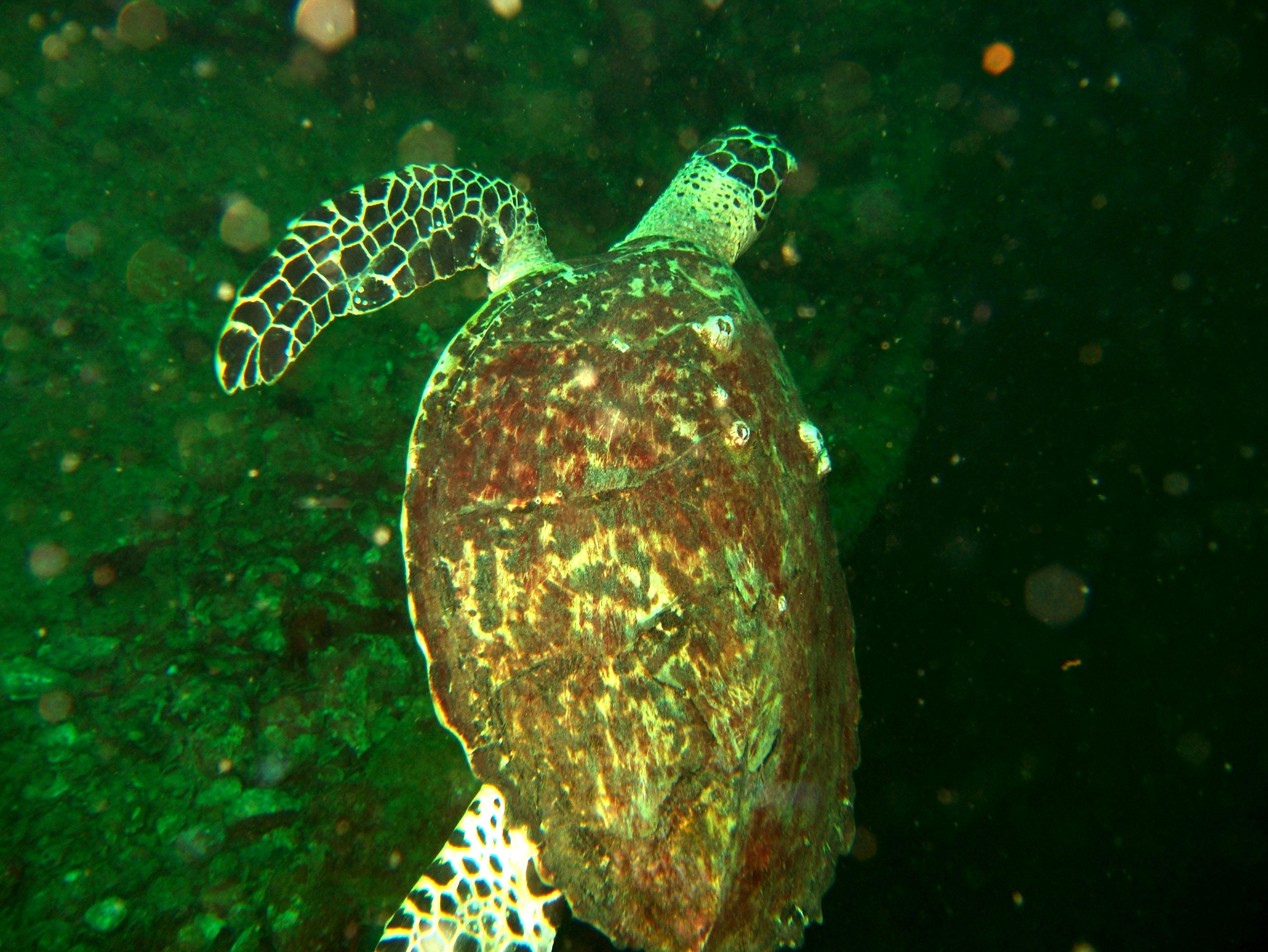 Coron dive site 9 Wreck dive East Tangat July 2005 38