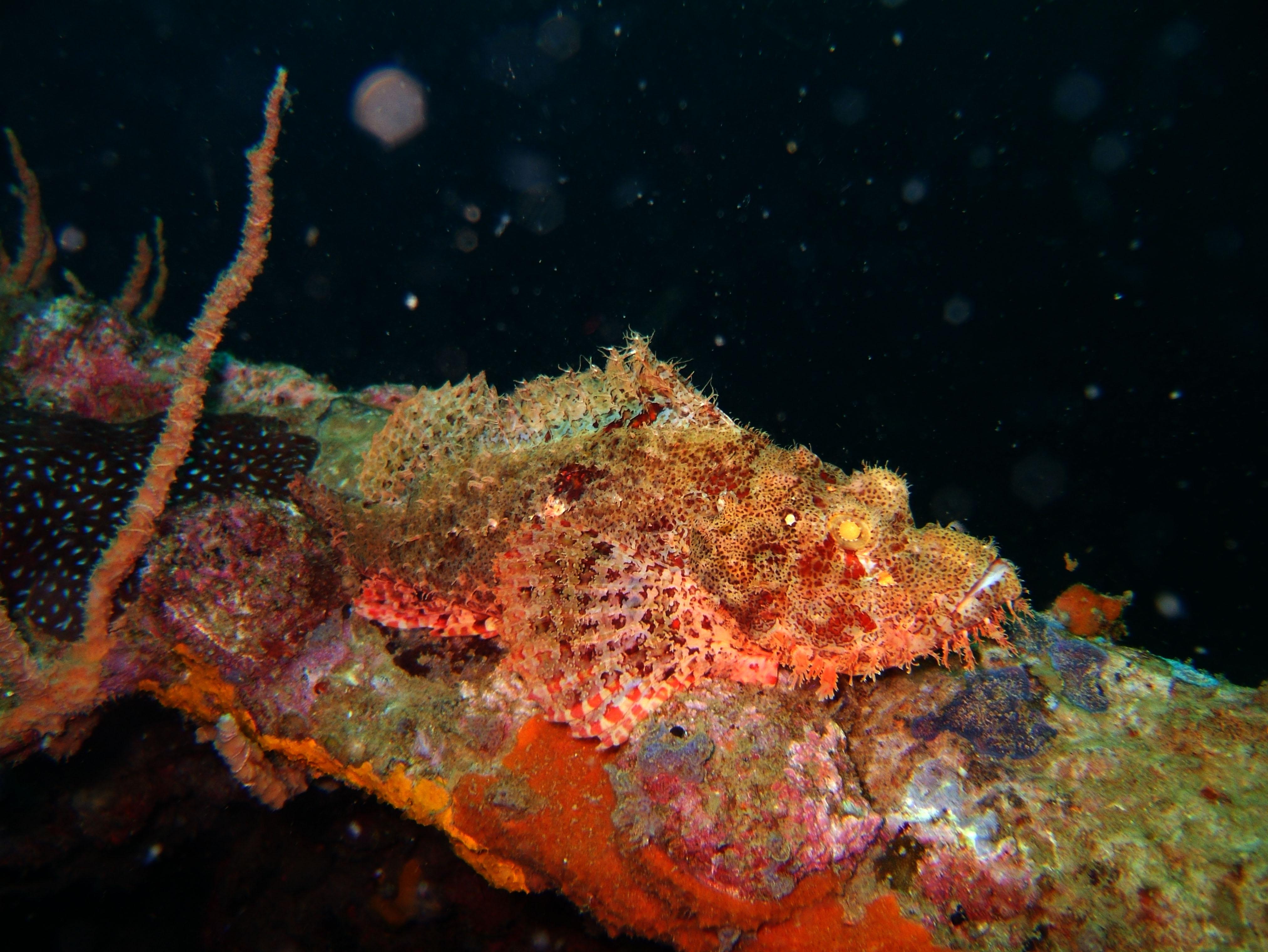 Coron dive site 9 Wreck dive East Tangat July 2005 43