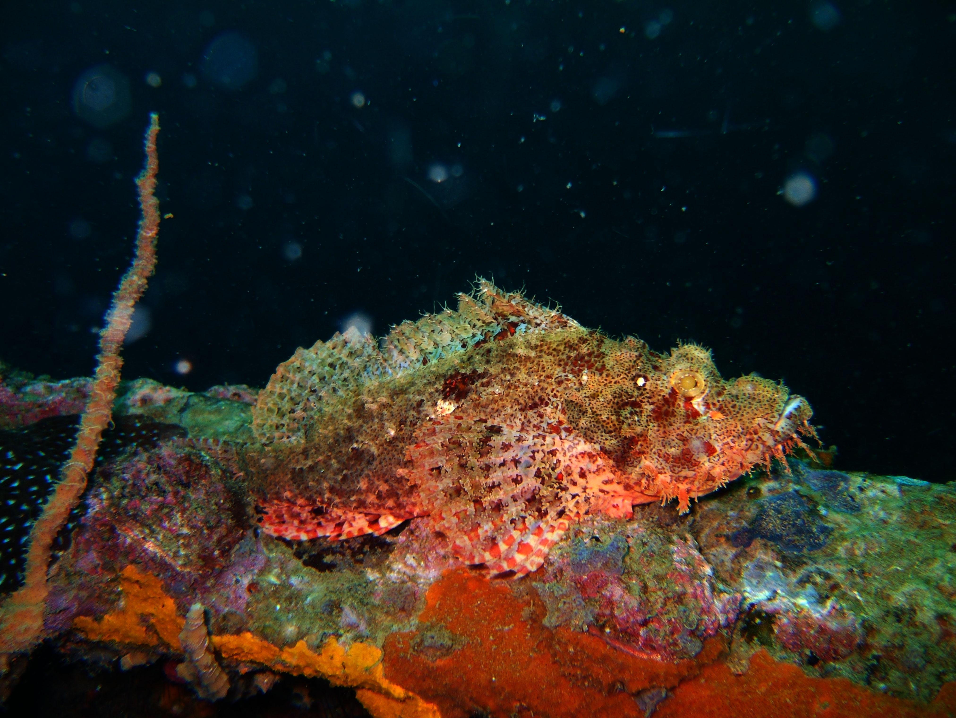 Coron dive site 9 Wreck dive East Tangat July 2005 44