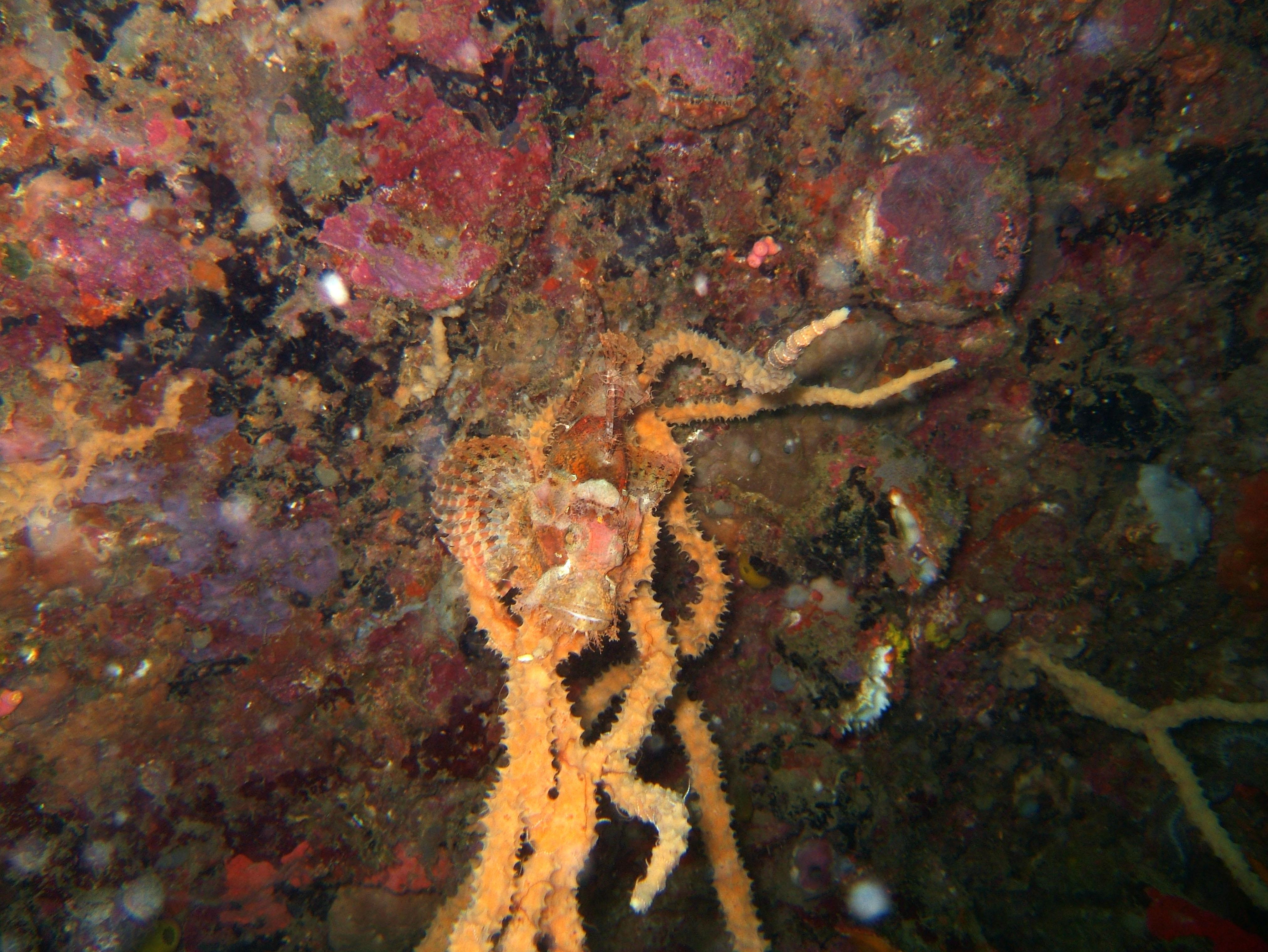 Coron dive site 9 Wreck dive East Tangat July 2005 54