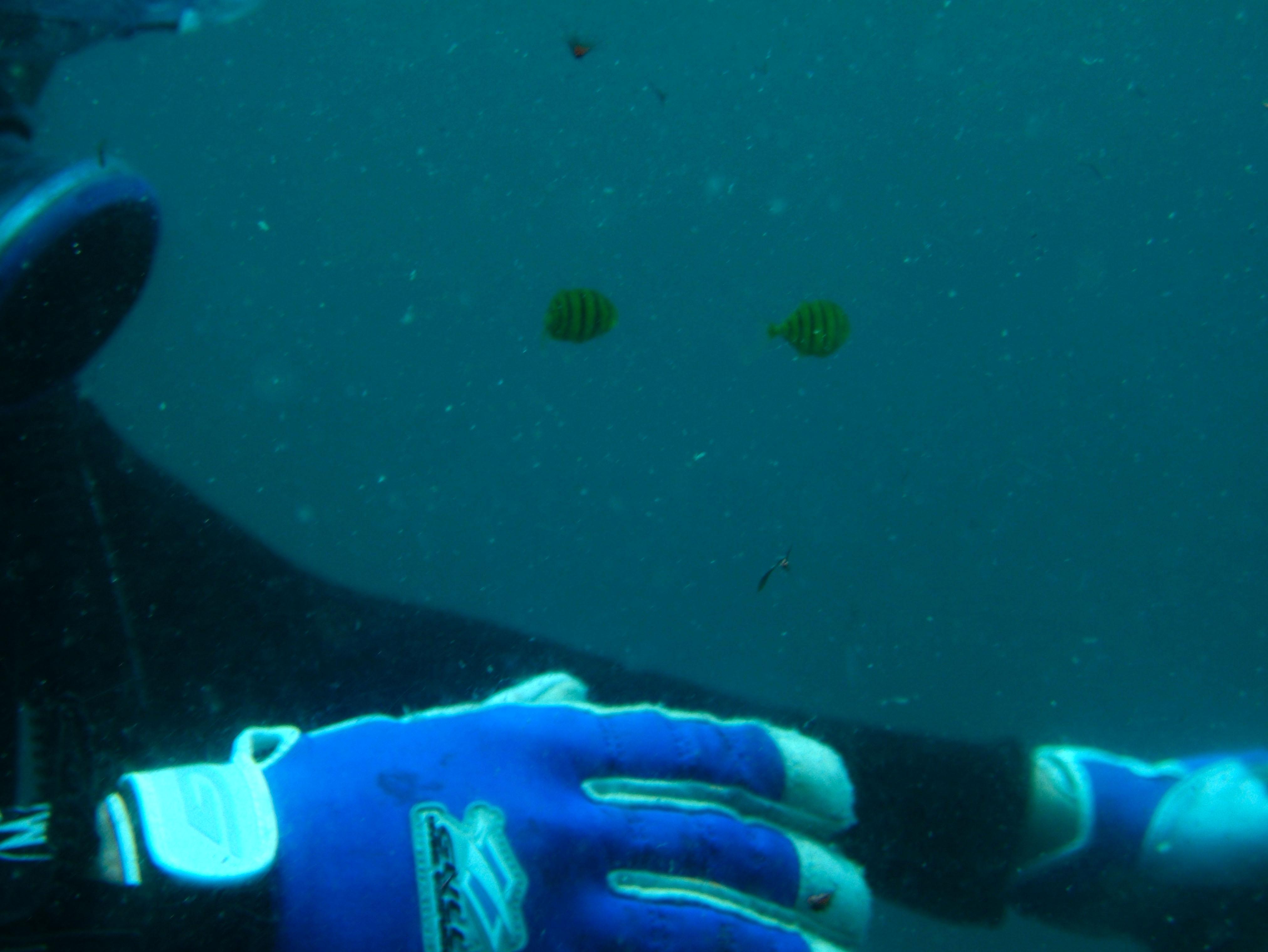 Coron dive site 9 Wreck dive East Tangat July 2005 63
