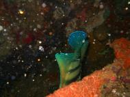 Asisbiz Coron dive site 2 Wreck dive IJN Taiei Maru July 2005 01