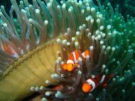Asisbiz Coron dive site 2 Wreck dive IJN Taiei Maru July 2005 02