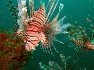 Asisbiz Coron dive site 2 Wreck dive IJN Taiei Maru July 2005 05