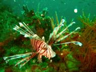 Asisbiz Coron dive site 2 Wreck dive IJN Taiei Maru July 2005 06