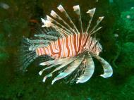 Asisbiz Coron dive site 2 Wreck dive IJN Taiei Maru July 2005 15