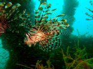 Asisbiz Coron dive site 2 Wreck dive IJN Taiei Maru July 2005 18