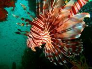 Asisbiz Coron dive site 2 Wreck dive IJN Taiei Maru July 2005 19