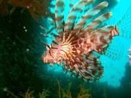 Asisbiz Coron dive site 2 Wreck dive IJN Taiei Maru July 2005 20