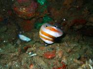 Asisbiz Coron dive site 2 Wreck dive IJN Taiei Maru July 2005 21