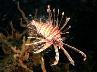 Asisbiz Coron dive site 2 Wreck dive IJN Taiei Maru July 2005 26