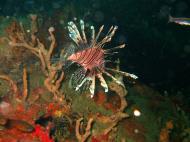 Asisbiz Coron dive site 2 Wreck dive IJN Taiei Maru July 2005 27
