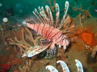 Asisbiz Coron dive site 2 Wreck dive IJN Taiei Maru July 2005 30