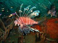 Asisbiz Coron dive site 2 Wreck dive IJN Taiei Maru July 2005 32