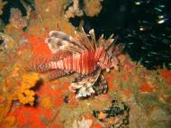 Asisbiz Coron dive site 2 Wreck dive IJN Taiei Maru July 2005 33