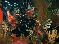 Asisbiz Coron dive site 2 Wreck dive IJN Taiei Maru July 2005 34