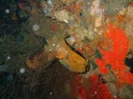 Asisbiz Coron dive site 2 Wreck dive IJN Taiei Maru July 2005 36
