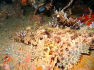 Asisbiz Coron dive site 2 Wreck dive IJN Taiei Maru July 2005 42