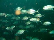 Asisbiz Coron dive site 7 Wreck dive IJN Irako July 2005 18
