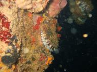 Asisbiz Coron dive site 8 Wreck dive IJN Olympia Maru July 2005 10