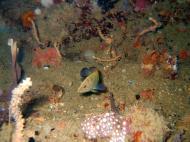 Asisbiz Coron dive site 8 Wreck dive IJN Olympia Maru July 2005 11