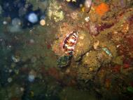 Asisbiz Coron dive site 8 Wreck dive IJN Olympia Maru July 2005 13
