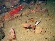 Asisbiz Coron dive site 8 Wreck dive IJN Olympia Maru July 2005 14