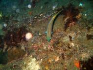 Asisbiz Coron dive site 8 Wreck dive IJN Olympia Maru July 2005 20
