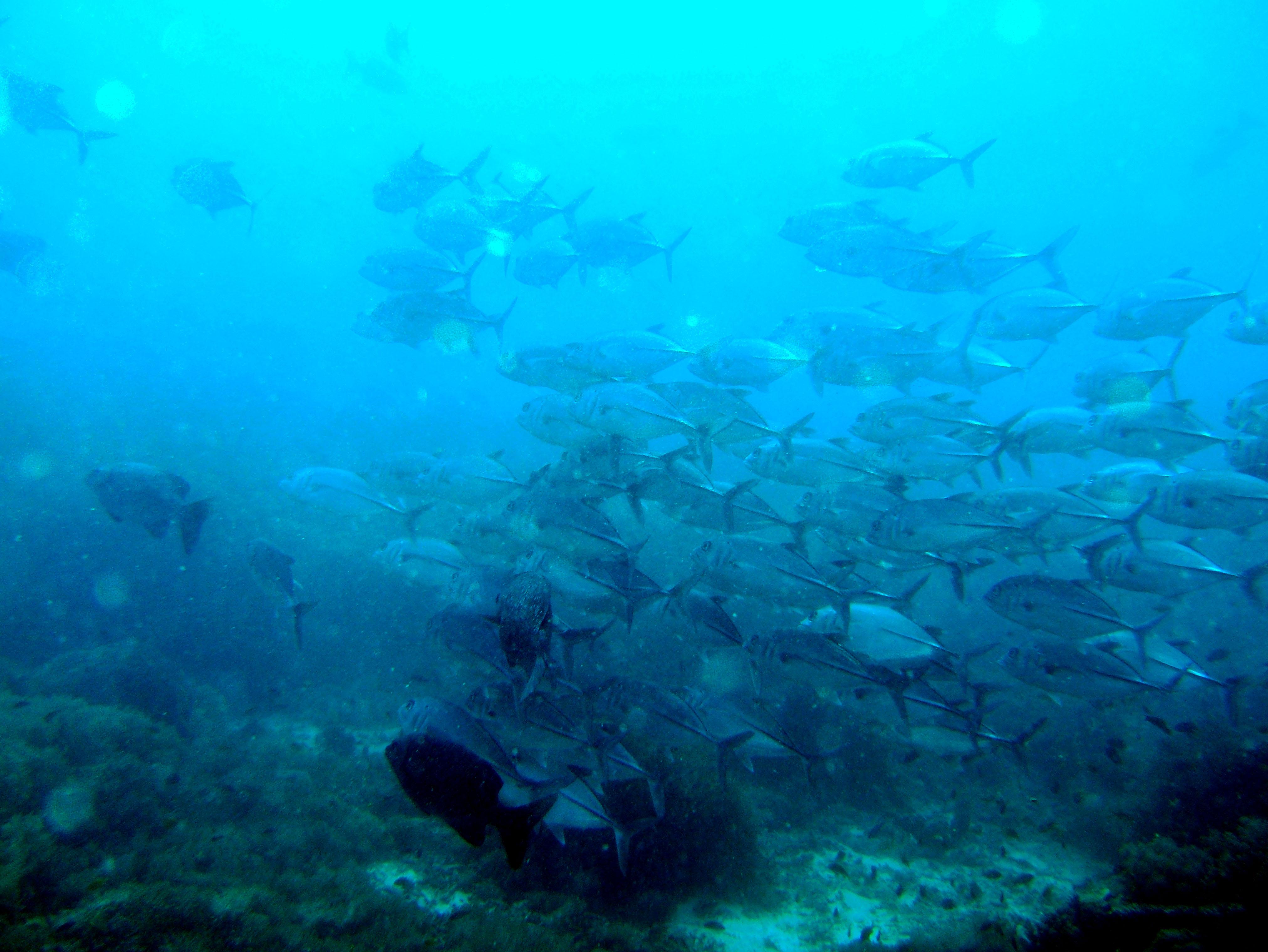 Philippines Cebu Bohol Balicasag Island Black Forest dive Dec 2005 03