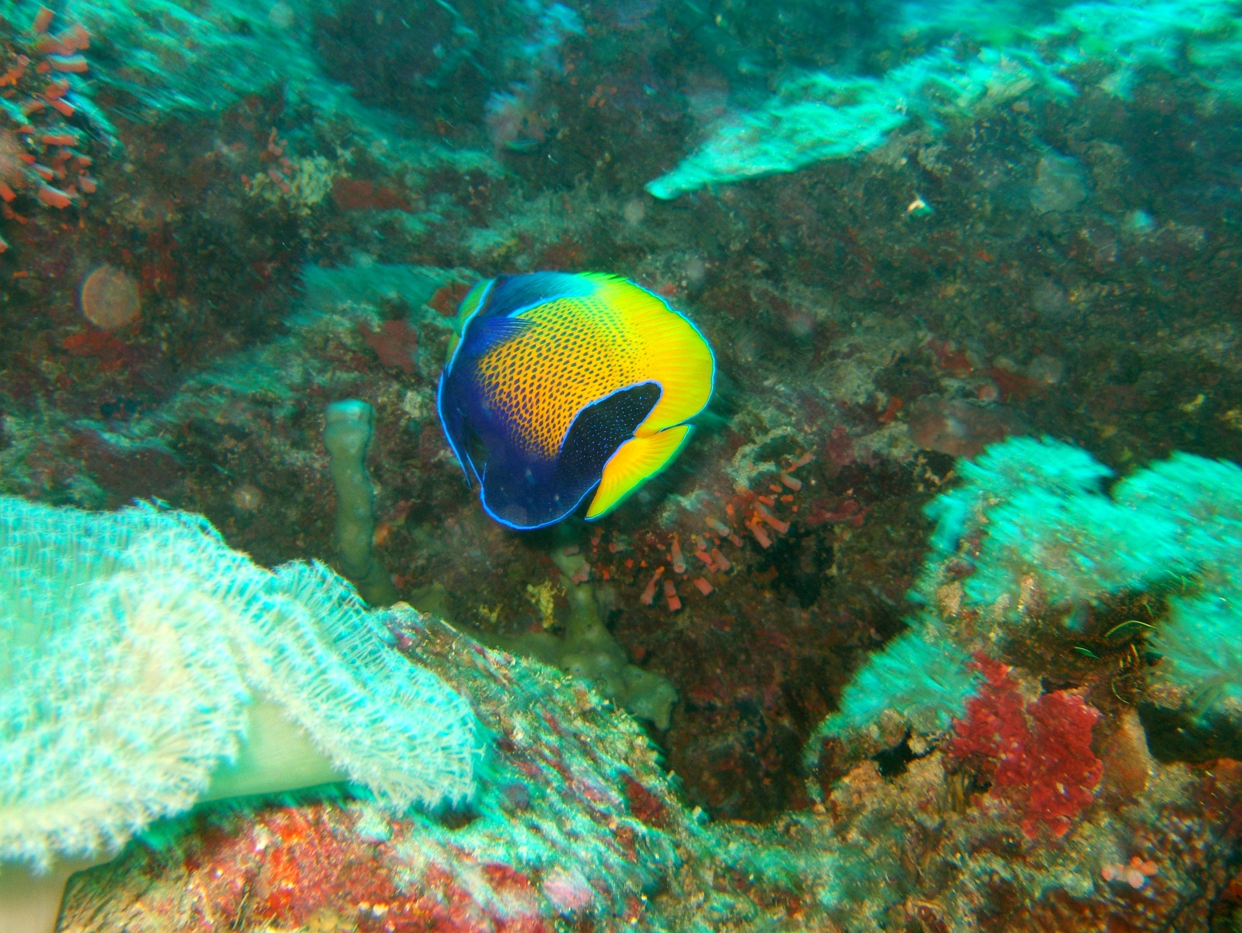 Philippines Cebu Bohol Balicasag Island Black Forest dive Dec 2005 14