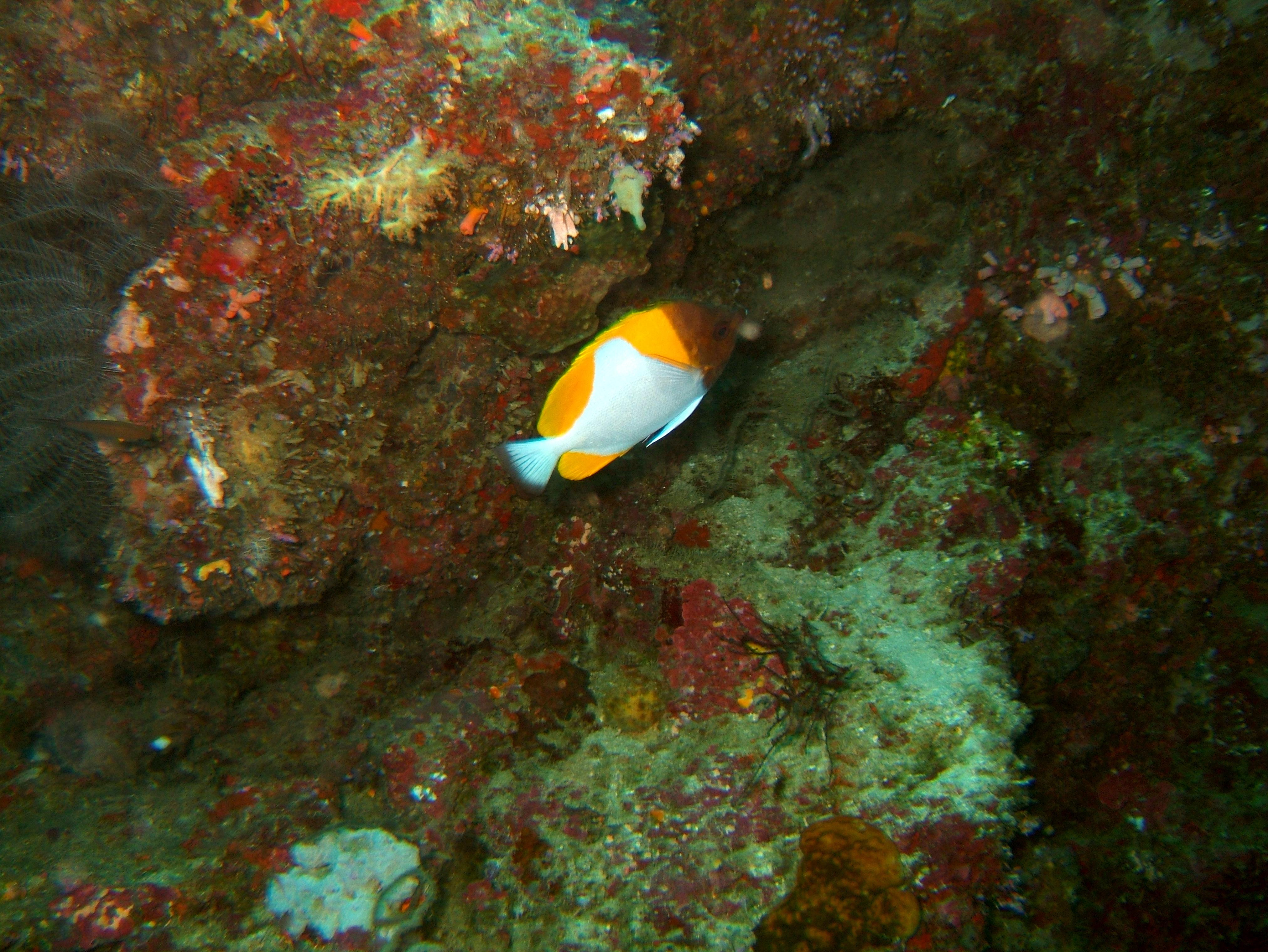 Philippines Cebu Bohol Balicasag Island Black Forest dive Dec 2005 17