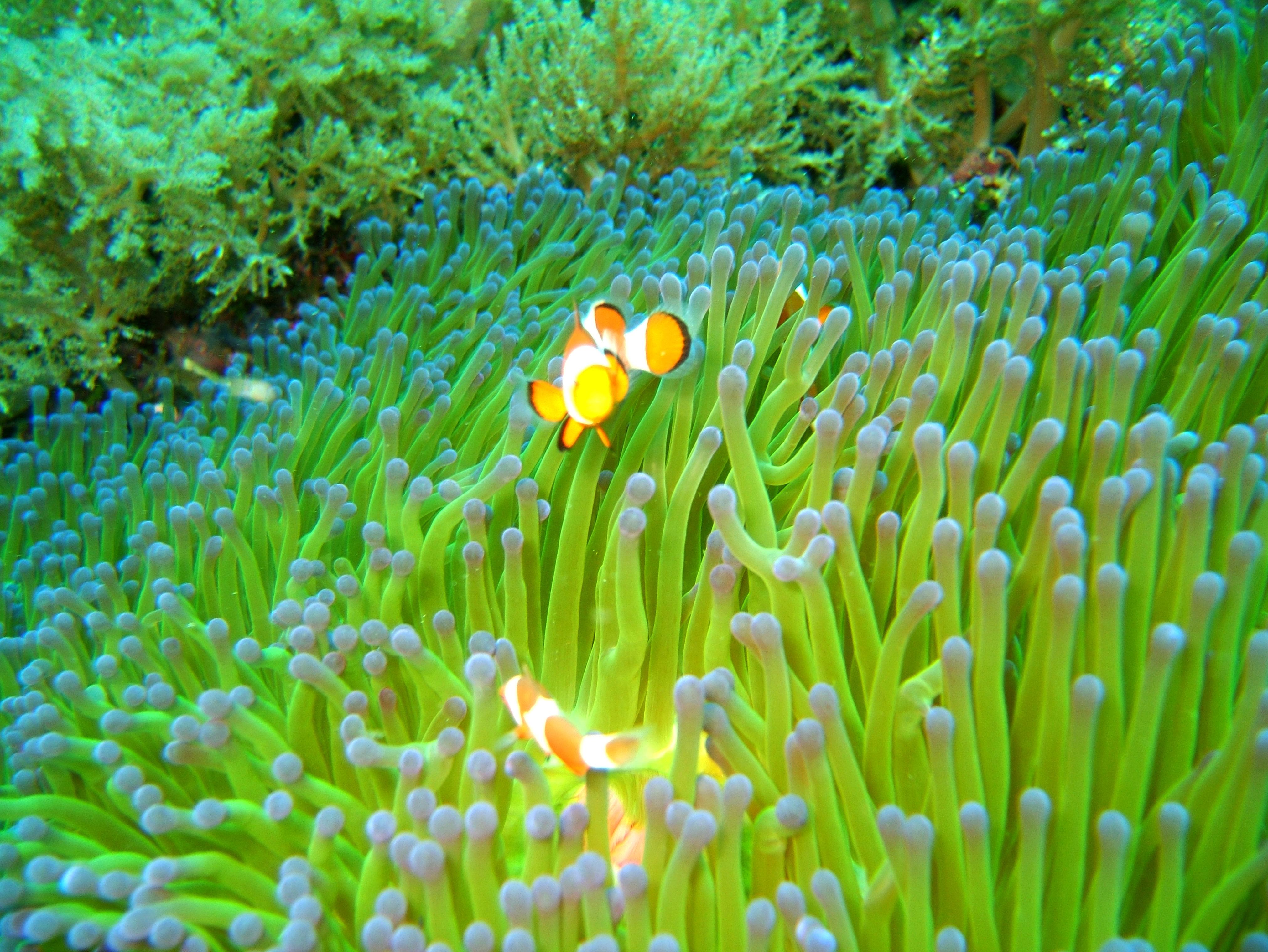 Philippines Cebu Bohol Balicasag Island Black Forest dive Dec 2005 19