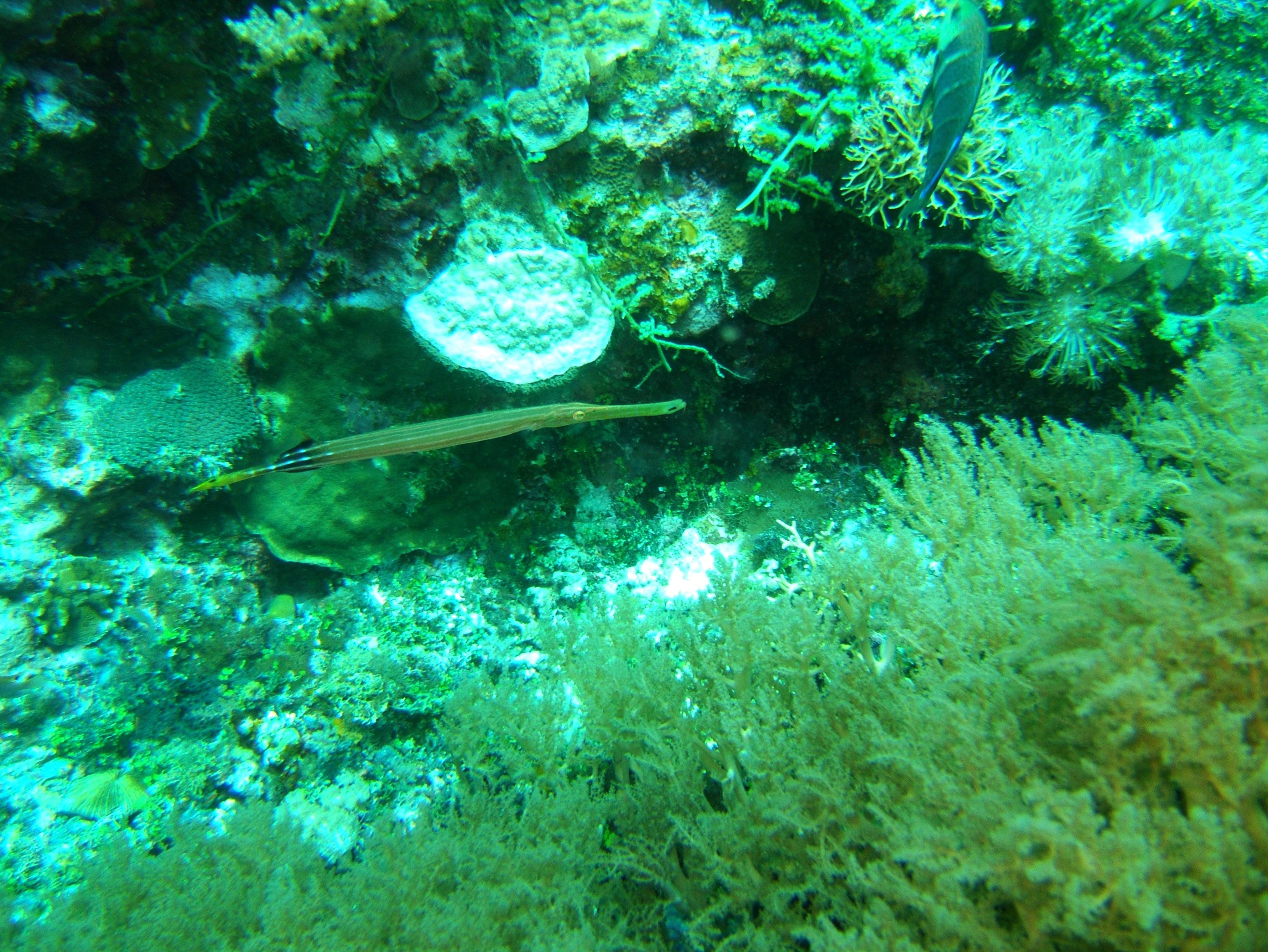 Philippines Cebu Bohol Balicasag Island Black Forest dive Dec 2005 23