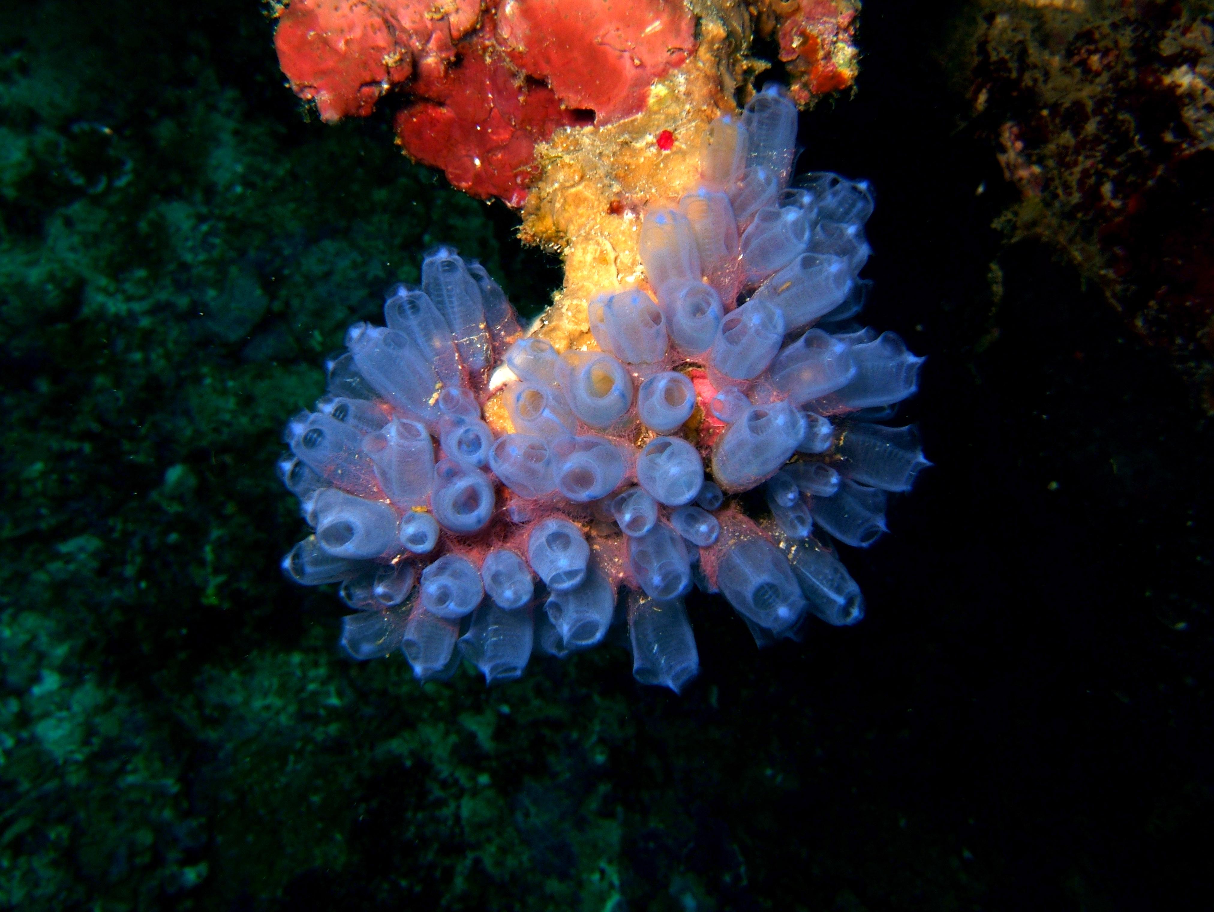 Philippines Cebu Bohol Balicasag Island Rudys rock dive Dec 2005 02