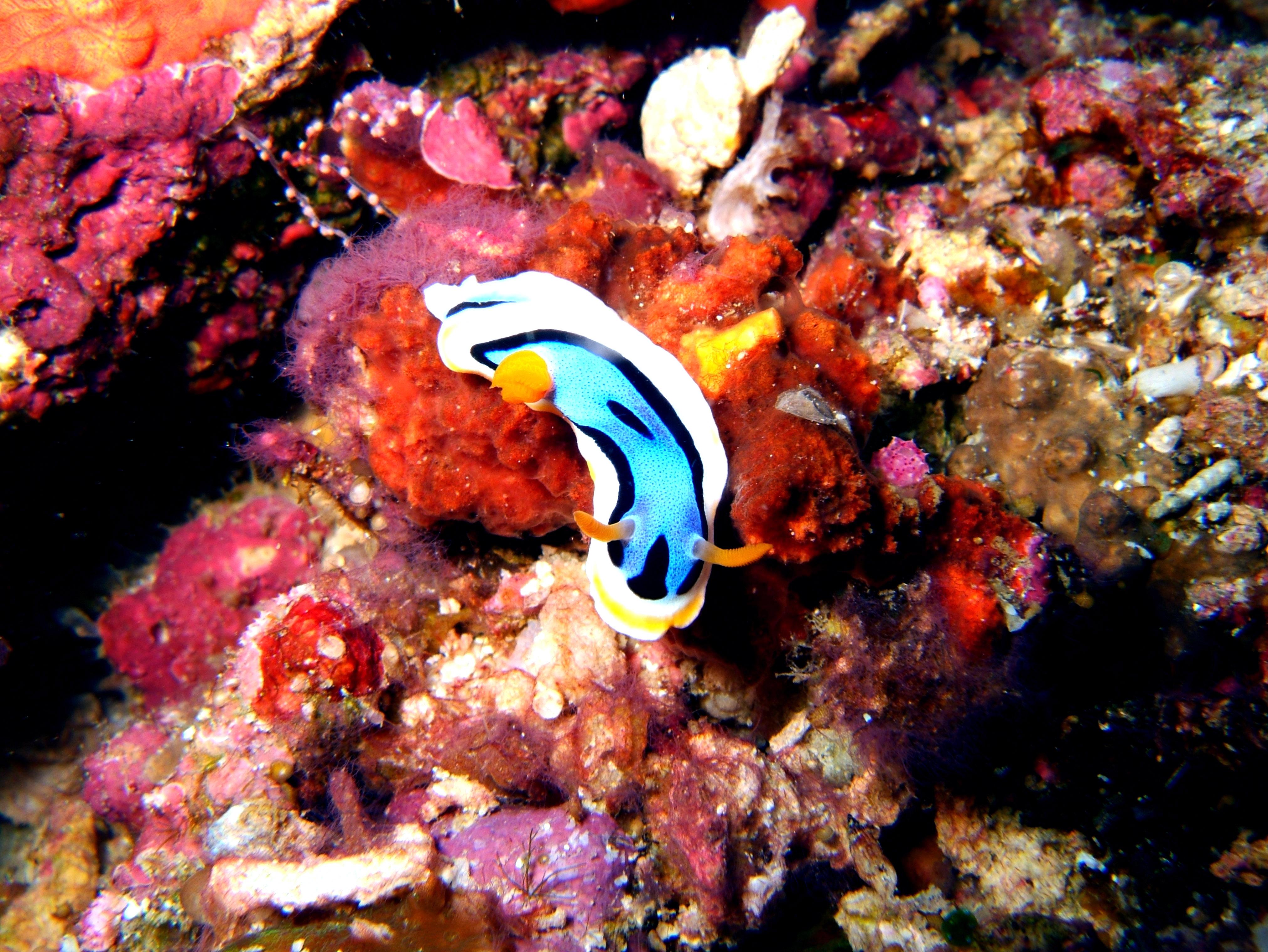 Philippines Cebu Bohol Balicasag Island Rudys rock dive Dec 2005 08