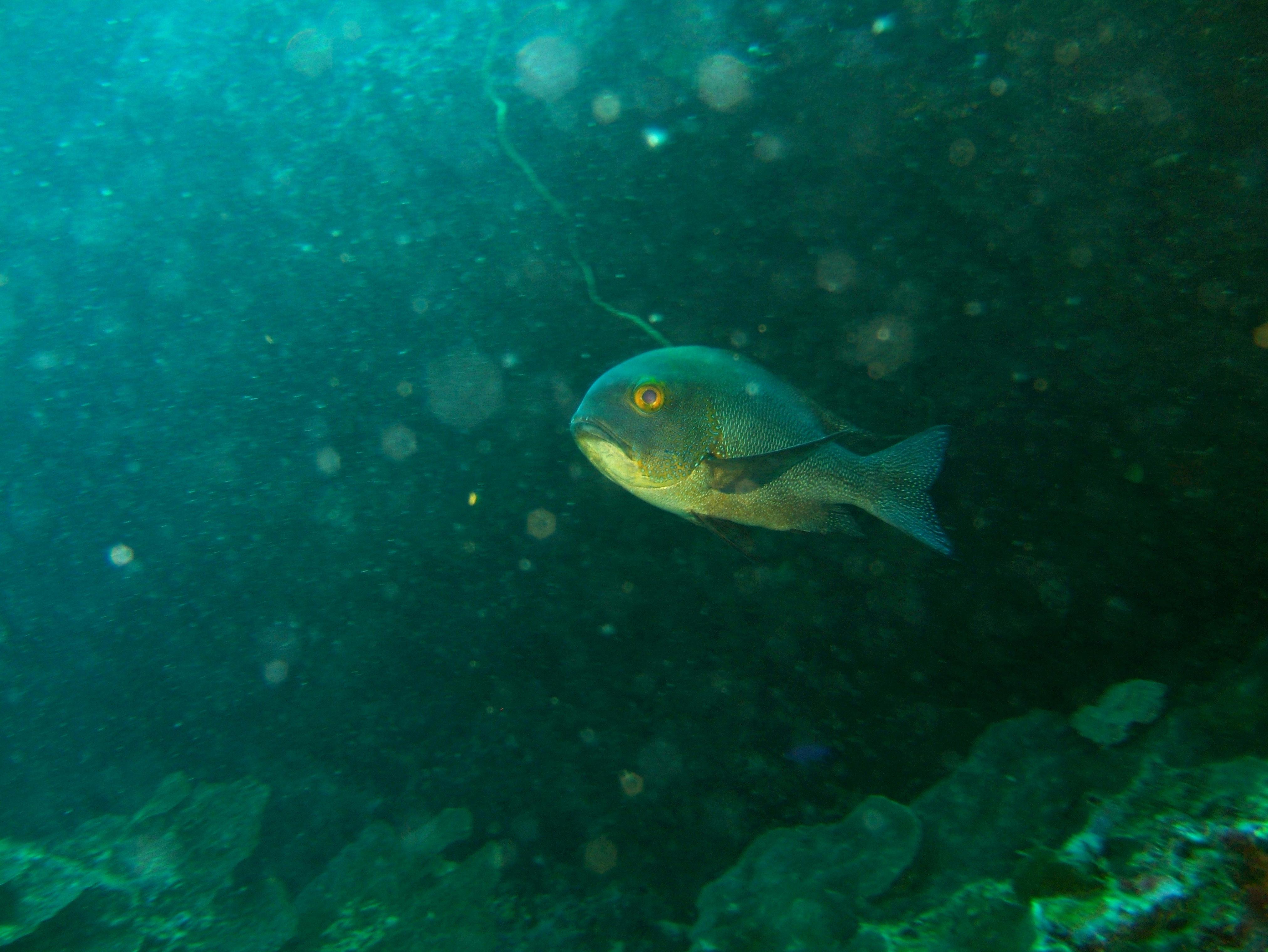 Philippines Cebu Bohol Balicasag Island Rudys rock dive Dec 2005 14