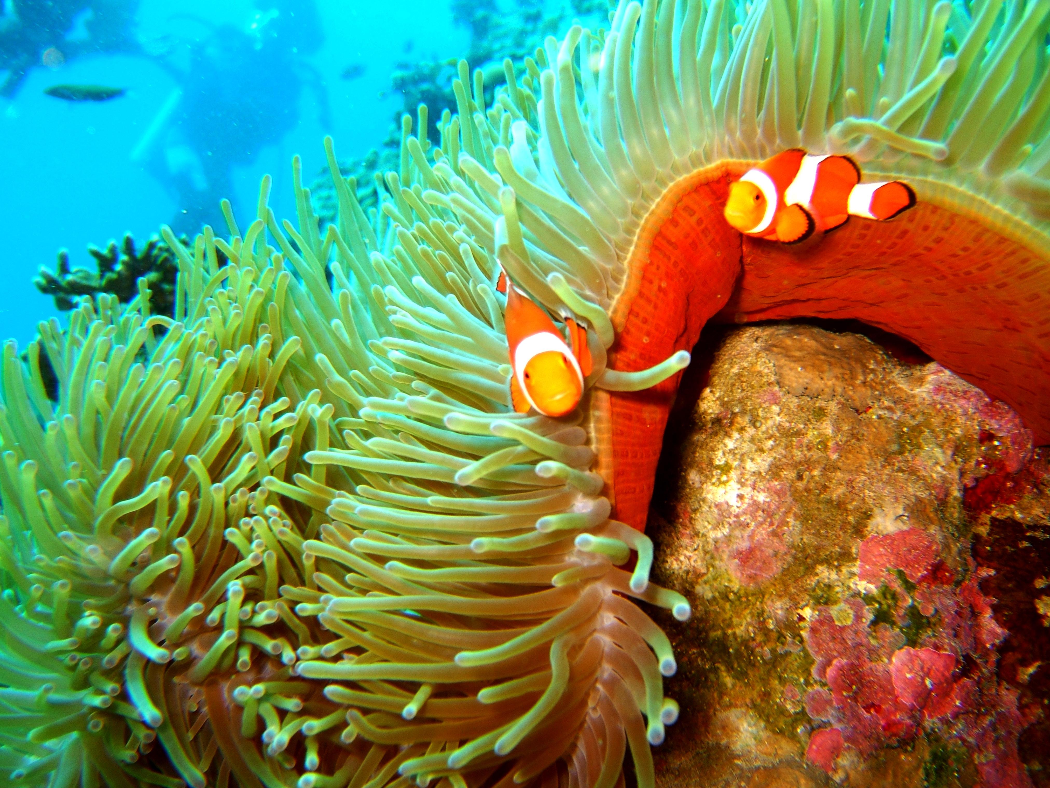 Philippines Cebu Bohol Balicasag Island Rudys rock dive Dec 2005 19